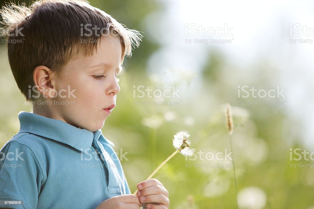 Boy with dandelion royalty-free stock photo
