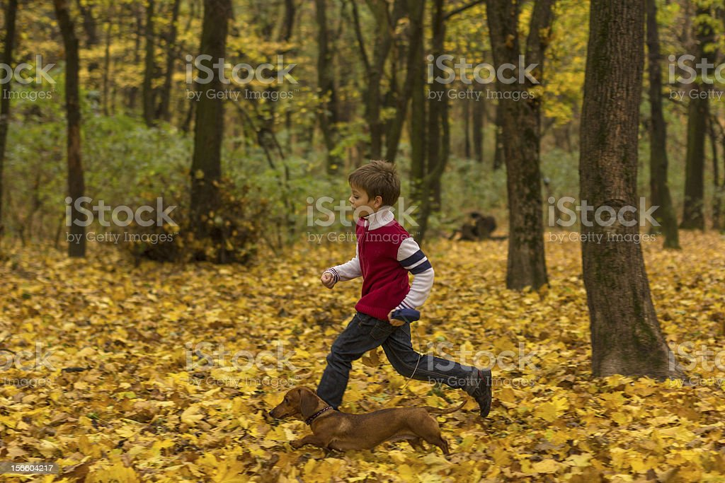 boy with dog, running in the autumn forrest royalty-free stock photo