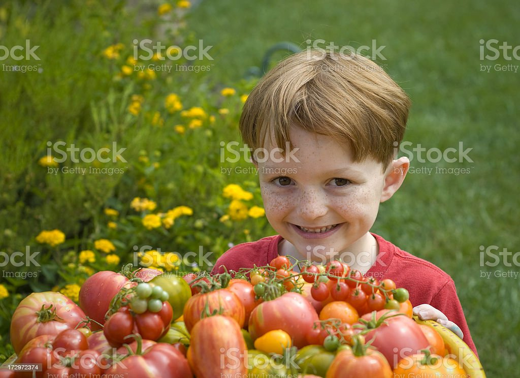 Boy with Heirloom Tomatoes, Child Vegetable Gardener & Homegrown Produce royalty-free stock photo