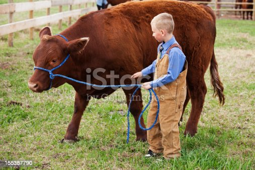 istock Boy with his 4-H Calf 155387790
