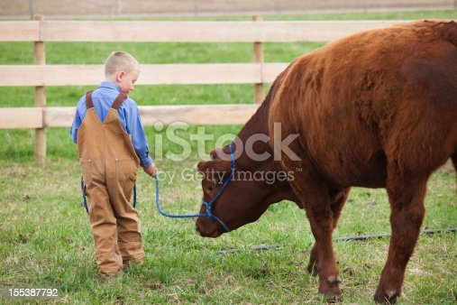 istock Boy with his 4-H Calf 155387792