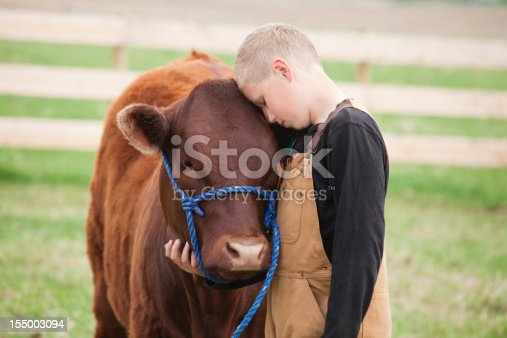 istock Boy with his Calf 155003094