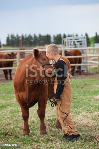 istock Boy with his Calf 155371861