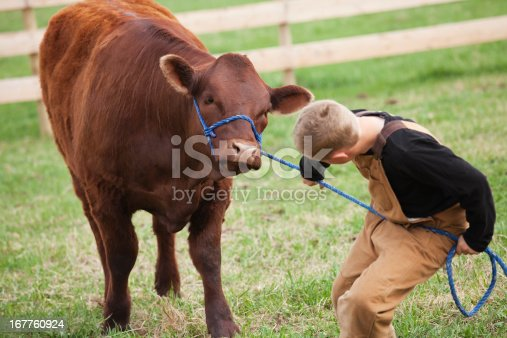 istock Boy with his Calf 167760924