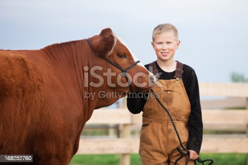 istock Boy with his Calf 168252760