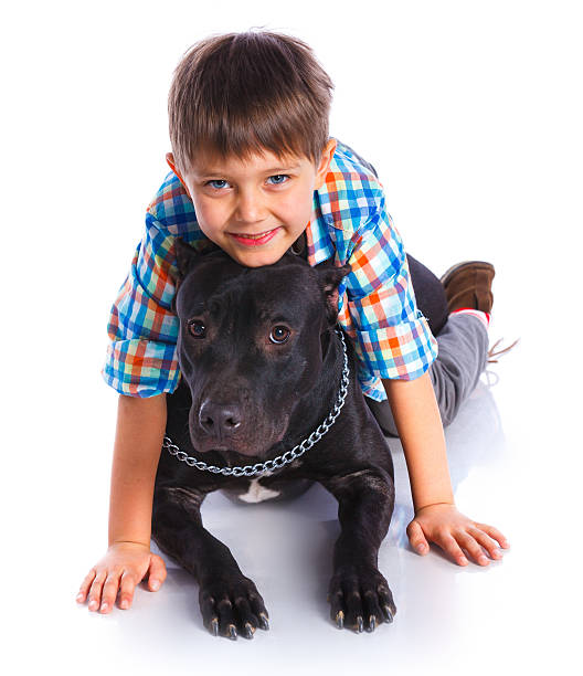 Boy with his Pit Bull Terrier stock photo