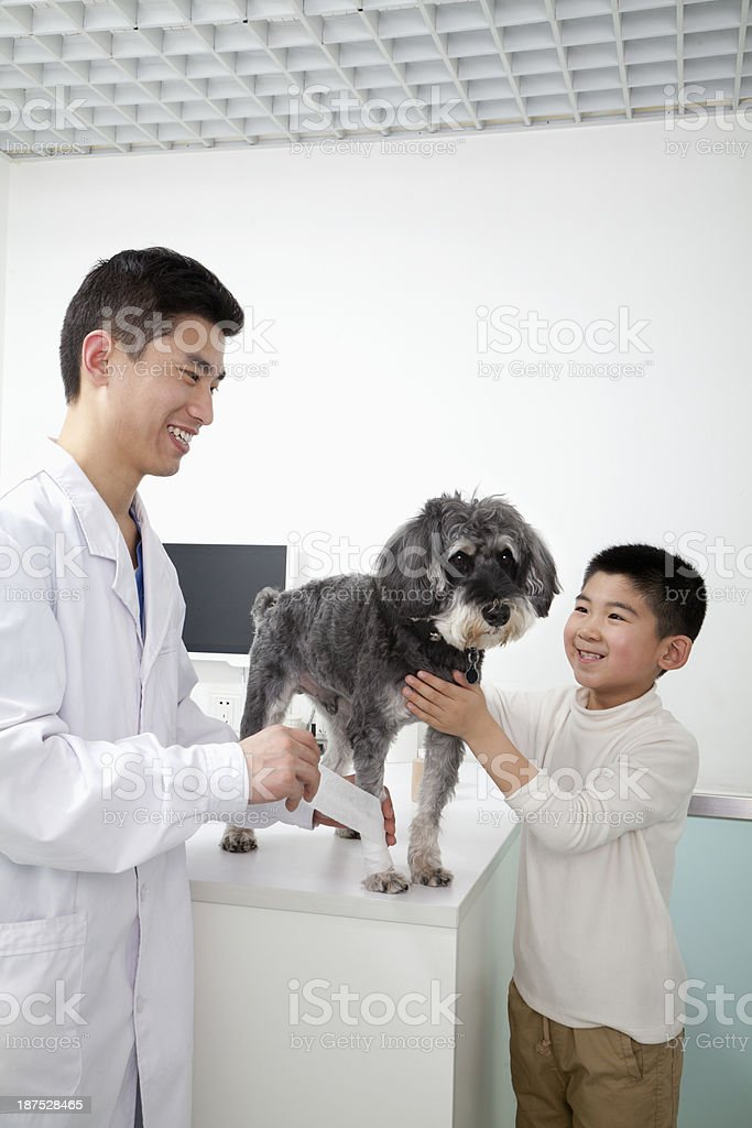 Boy with pet dog in veterinarian's office royalty-free stock photo