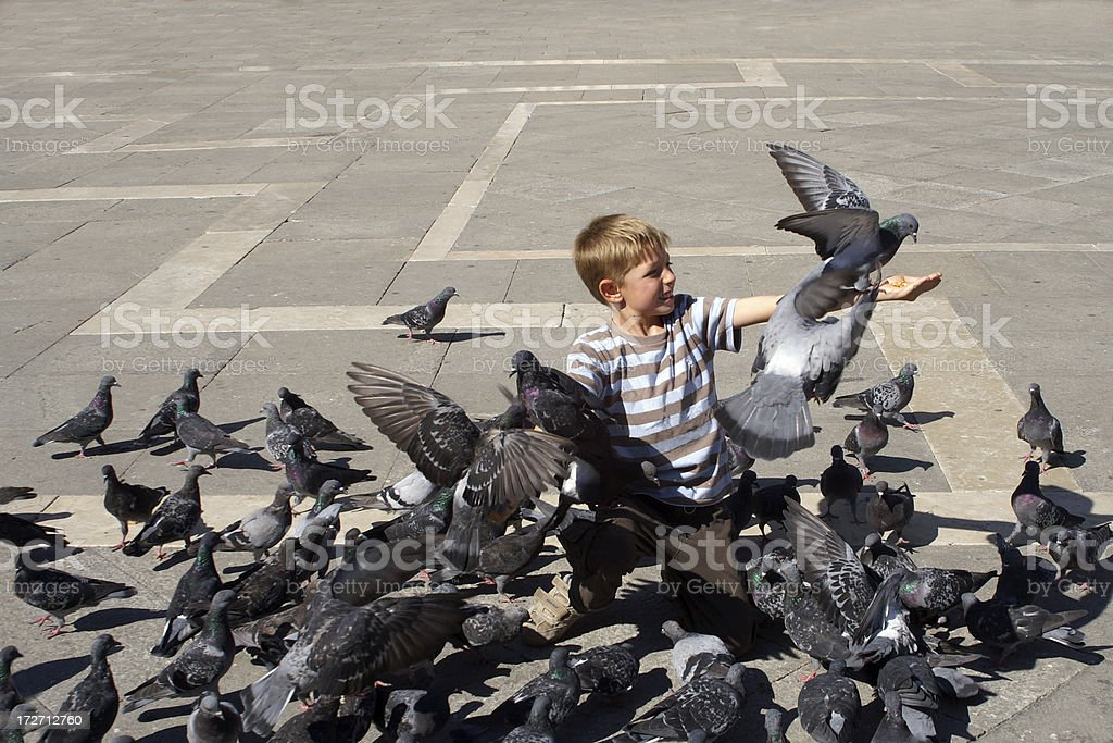 Boy with pigeons royalty-free stock photo