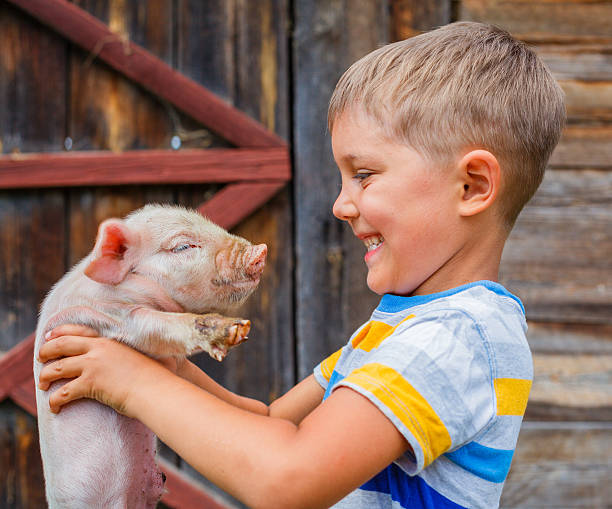 boy with piglet - pig farm stockfoto's en -beelden