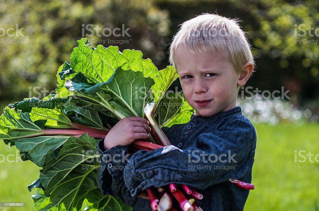 Boy with Rhubarbs in Garden stock photo