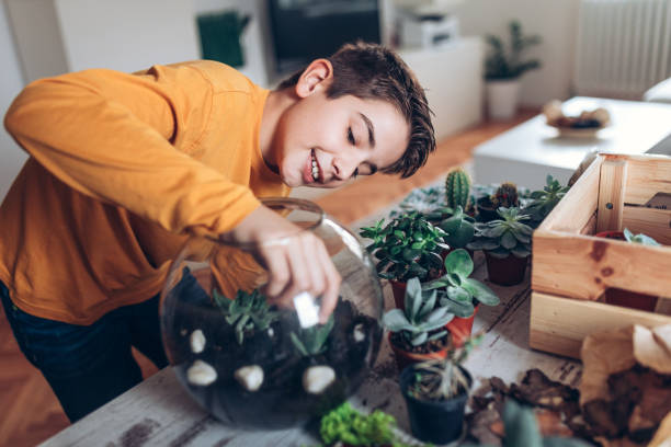 junge mit terrarium zu hause - terrarienpflanzen stock-fotos und bilder