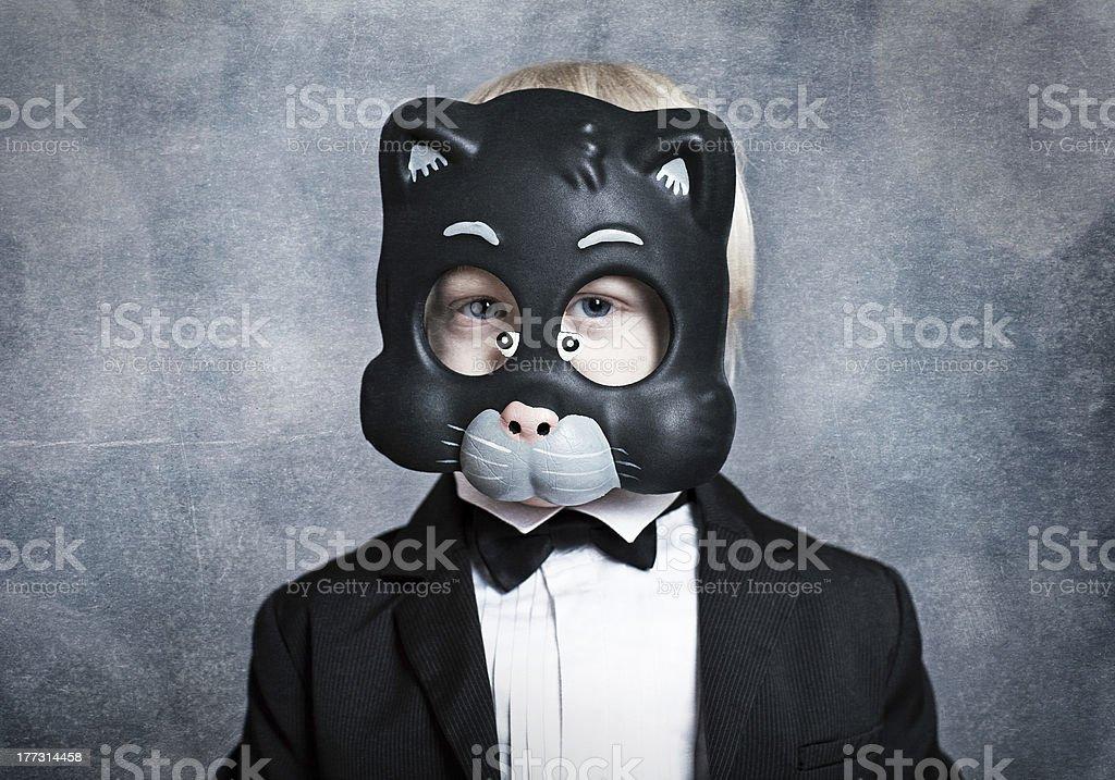 Junge-Katze – Foto