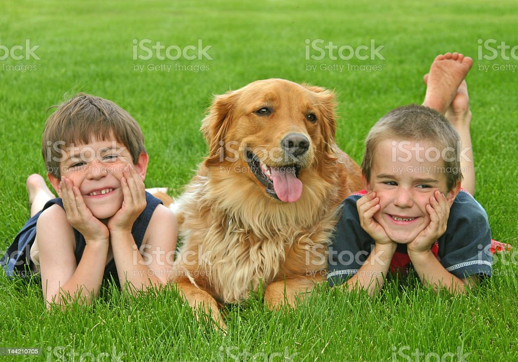 Boys and golden retriever laying in grass field stock photo