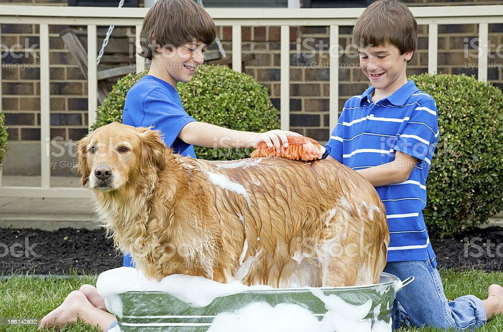 Boys Giving Dog a Bath stock photo