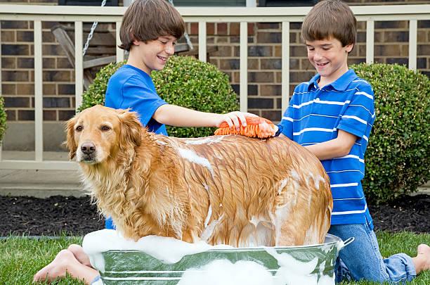 Boys Giving Dog a Bath stock photo