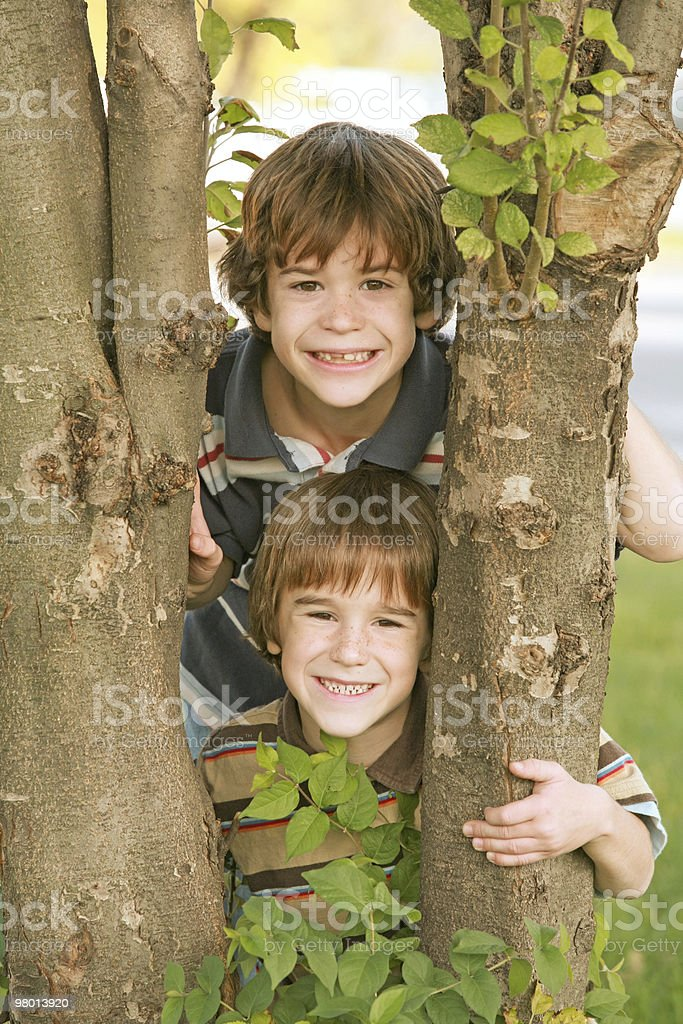 Boys in a Tree royalty-free stock photo