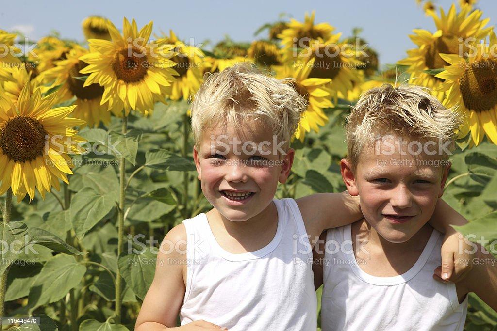 Jungen im Sonnenblumen Feld Lizenzfreies stock-foto