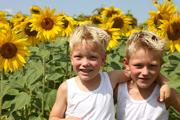 Boys In Sunflower Field stock photo