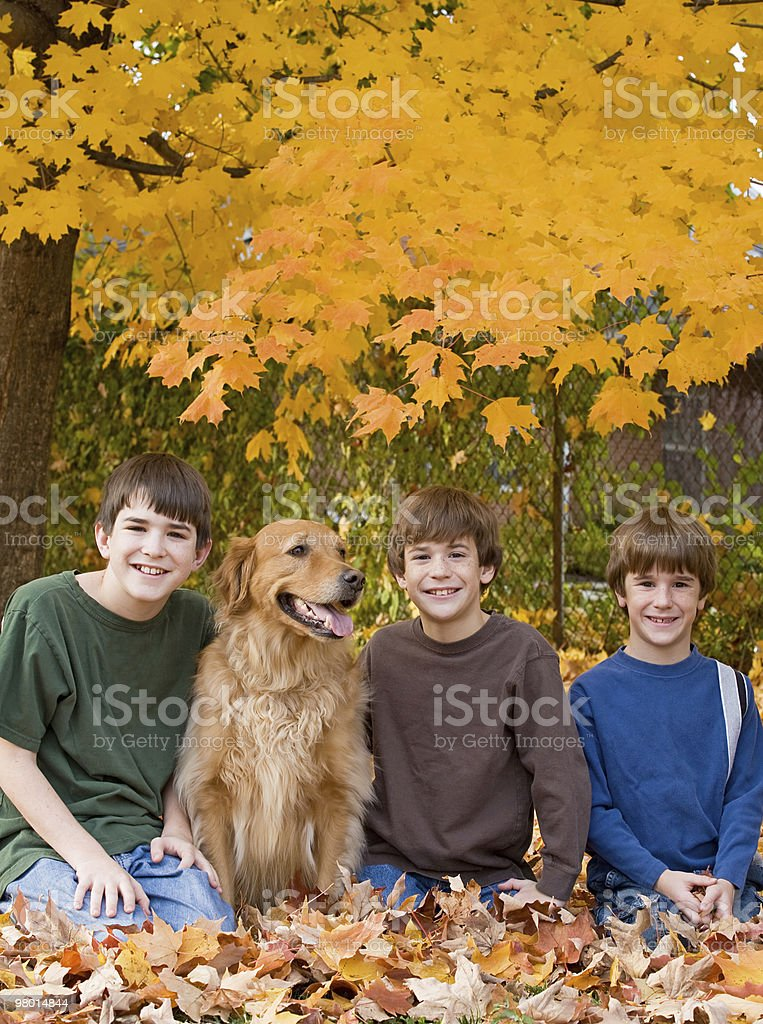 Boys in the Fall Leaves royalty-free stock photo
