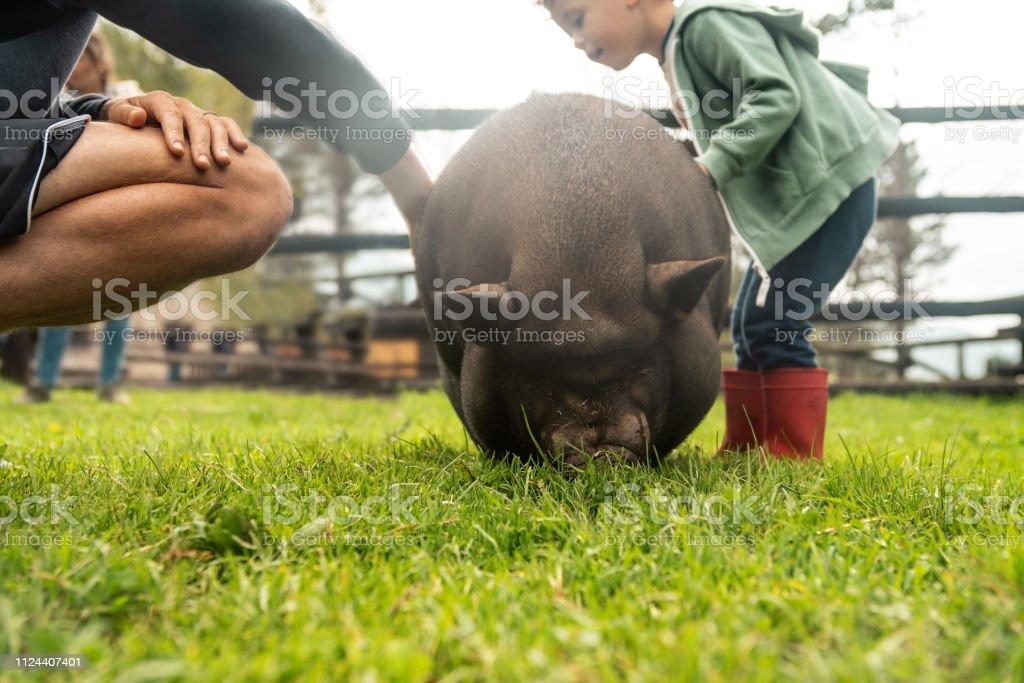 Boys playing at a farm stock photo