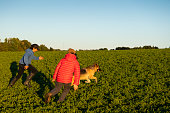 Two brothers playing on a farm field with their German Shepherd.