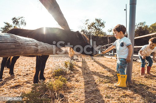 Boys playing with a pony at farm