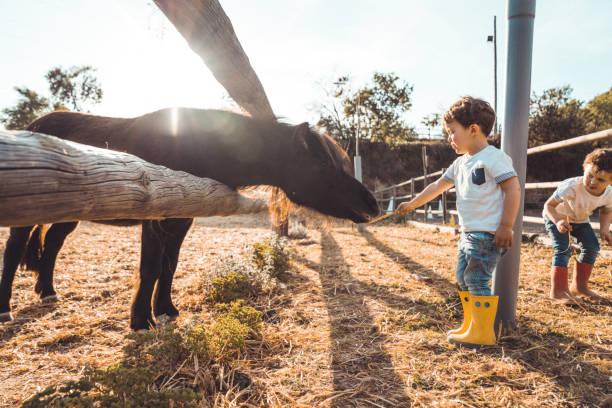 jungs spielen mit einem pony auf der farm - vorschulzoothema stock-fotos und bilder