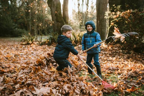 Boys Raking Up Autumn Leaves stock photo