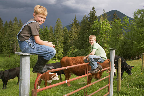 Boys sitting on fence Boys sitting on fence bib overalls boy stock pictures, royalty-free photos & images