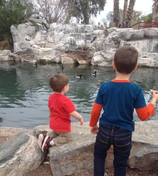 Boys watching the ducks stock photo