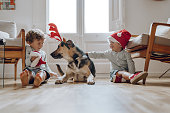 Boys wearing chritmas hats playing with dogs