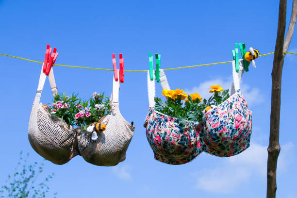 Bra on a washing line with plants growing in the cups Funny photo of recycled old bra/brassier pegged on a washing line with plants growing in the cups against a blue sky bra stock pictures, royalty-free photos & images