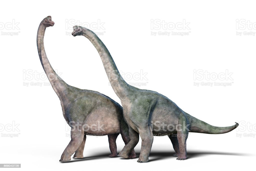 Brachiosaurus altithorax couple stock photo
