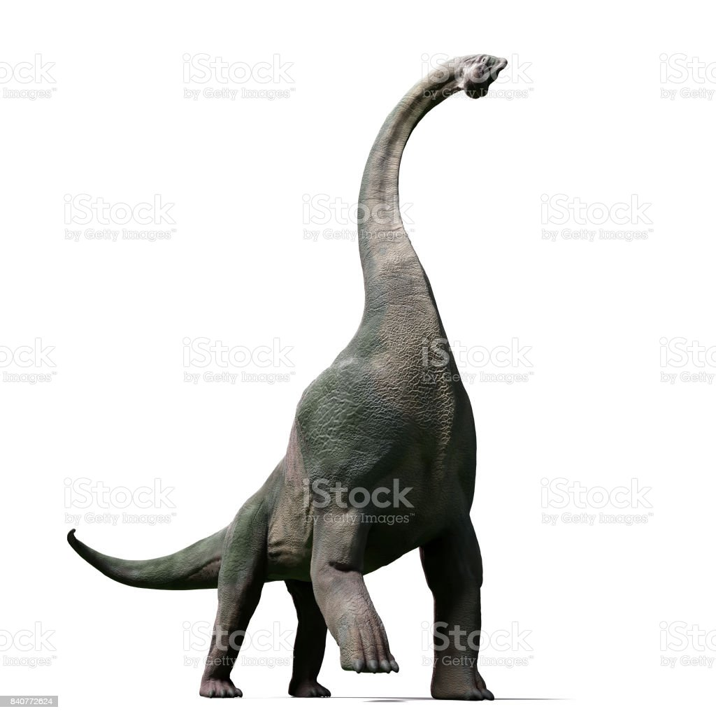 Brachiosaurus altithorax from the Late Jurassic stock photo