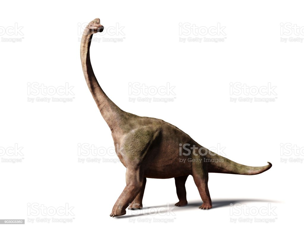 Brachiosaurus altithorax from the Late Jurassic (3d illustration isolated on white background) stock photo