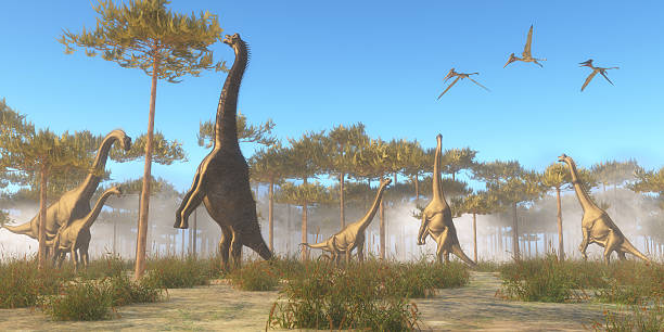 brachiosaurus durchsuchen - dinosaurier illustration stock-fotos und bilder