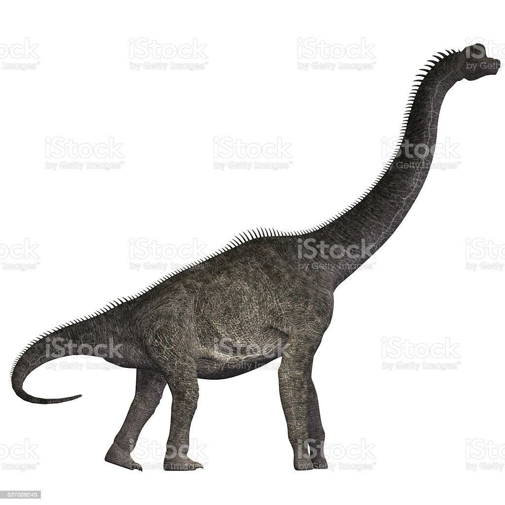 Brachiosaurus on White stock photo