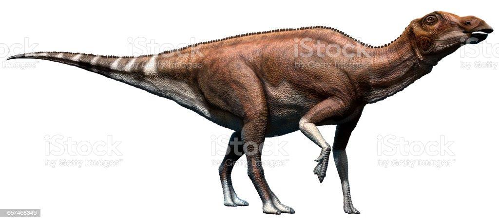 Brachylophosaurus stock photo