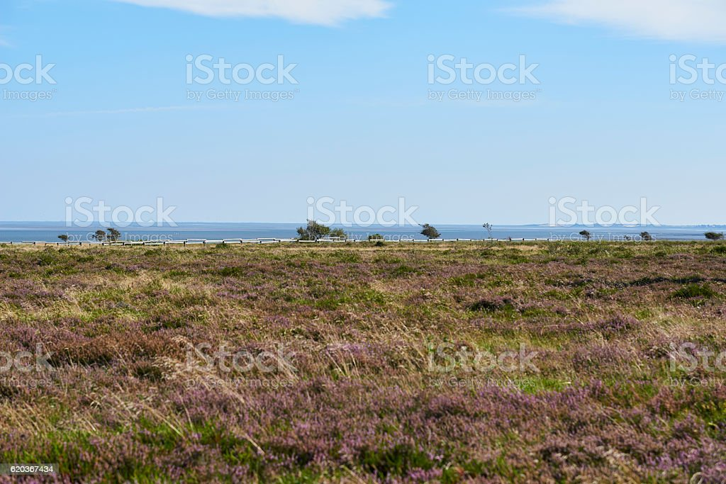 braderup, sylt, germany foto de stock royalty-free