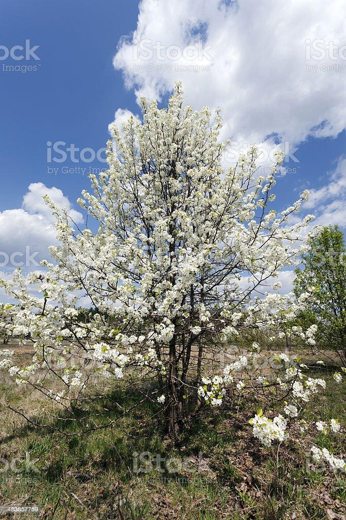Bradford in Bloom stock photo