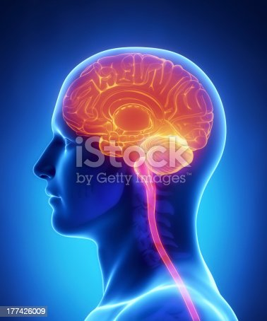 istock Brain anatomy - cross section 177426009