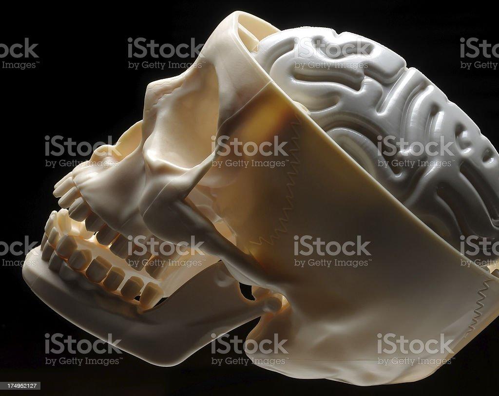 Brain and Skull Plastic stock photo