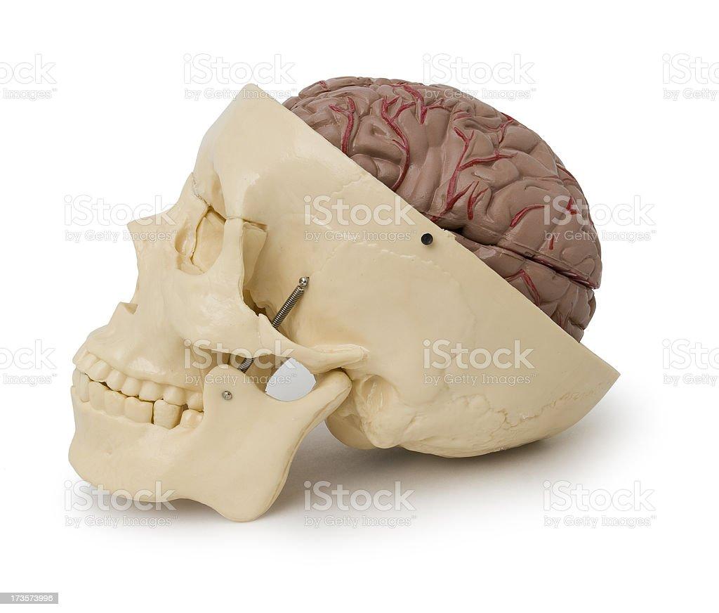 Brain and skull with path royalty-free stock photo