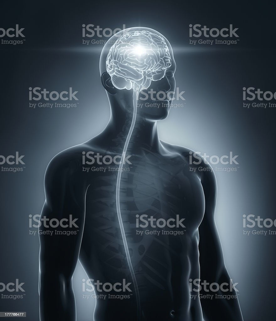 Brain and spinal cord medical x-ray scan stock photo