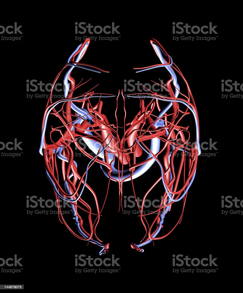 Brain Arteries and Veins Top View stock photo