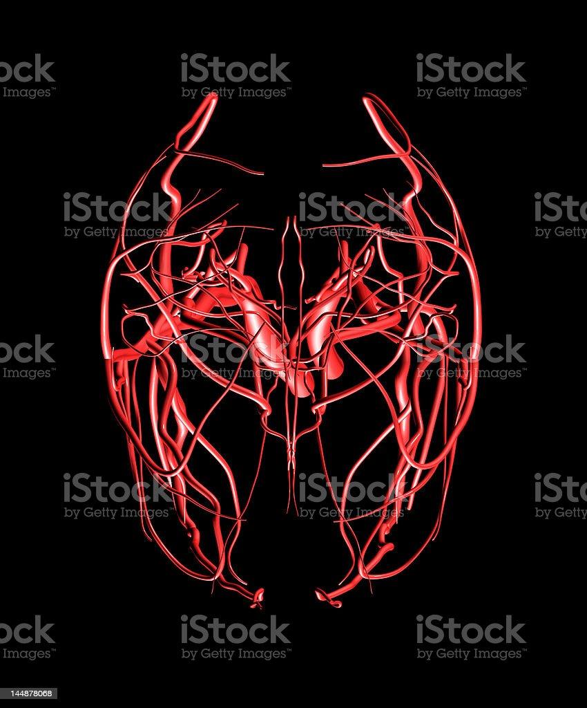 Brain Arteries Top View stock photo