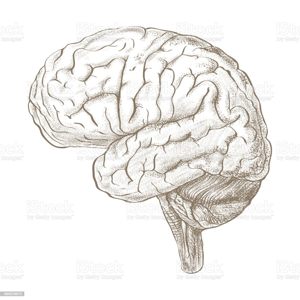 Brain as a pencil sketch style image stock photo