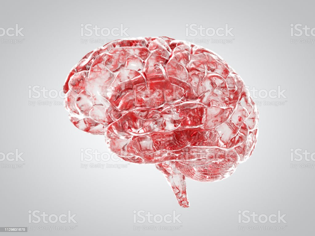 Brain blood veins medical concept Brain with showing blood veins in clear crystal transparent material.  Side view. Anatomy Stock Photo