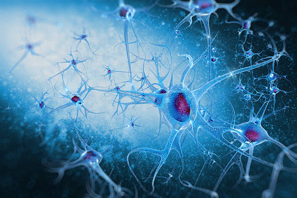brain cells neurons digital illustration Human brain cells neurons nerve fiber stock pictures, royalty-free photos & images