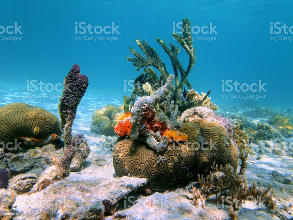 Brain coral and sea sponges stock photo